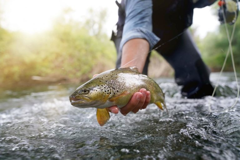 What Does Trout Taste Like – Is the Flavor of Trout Like That of Salmon?